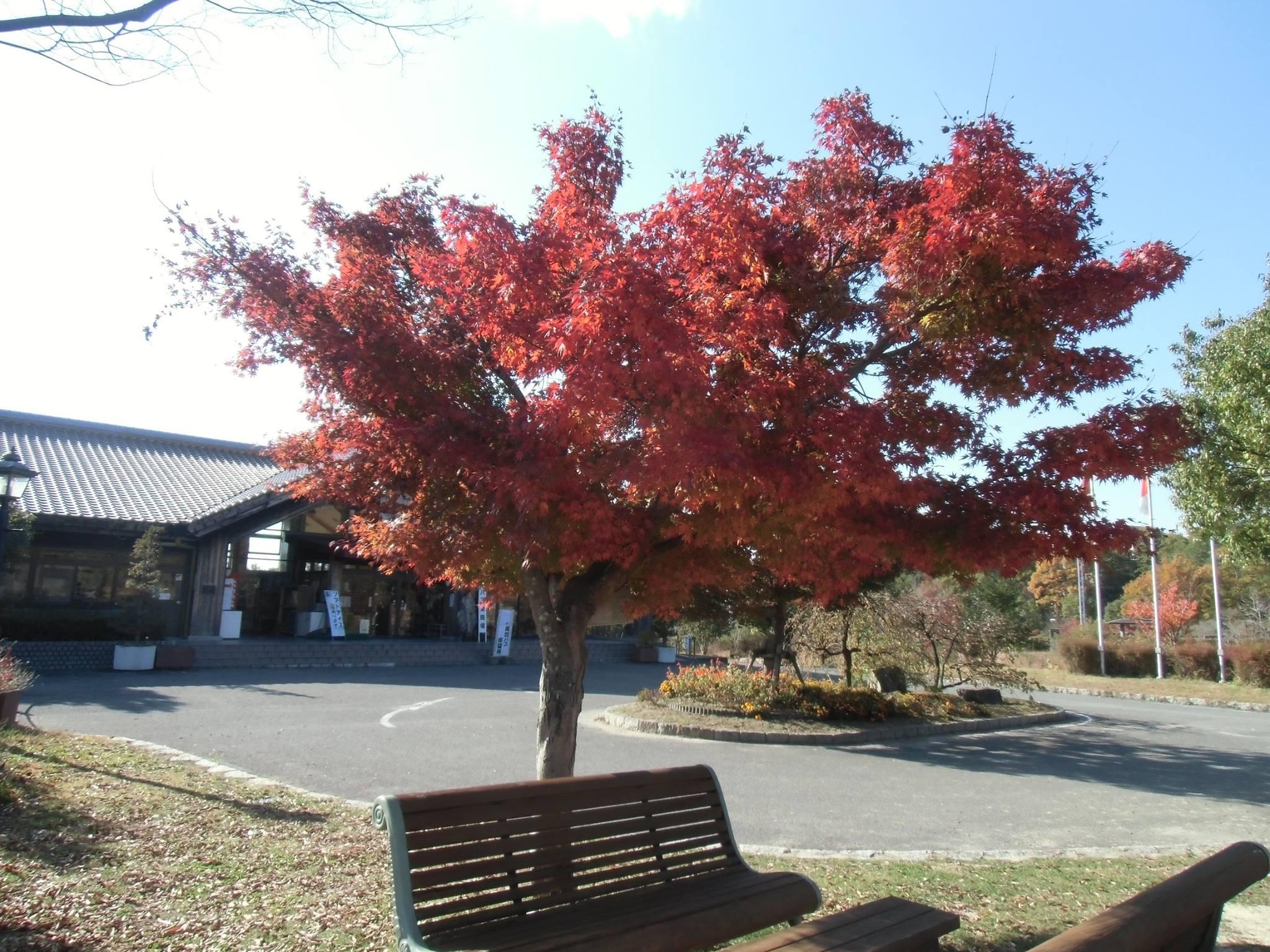 広島県立中央森林公園 紅葉 どろんこ忘年会